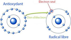 Eau hydrogénée par Idrogen agit contre les radicaux libres