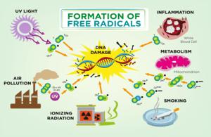 eau hydrogénée contre radicaux libre IDROGEN