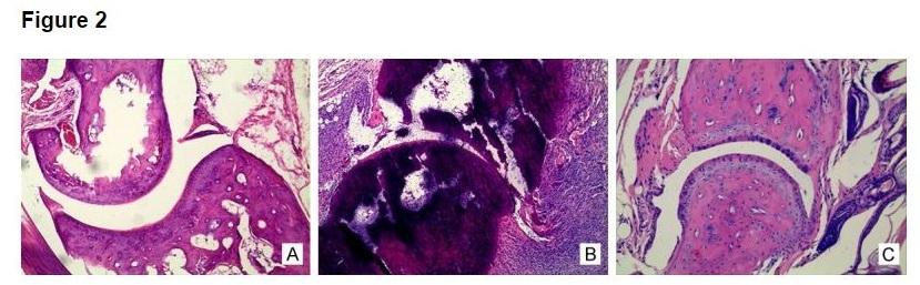 action de l'eau hydrogénée sur histopathologie du rat